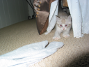 Leroo Playing Under Bed